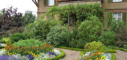 cottage garden plants - milky homes