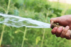 What Is The Best Way To Water Your Lawn Efficiently?