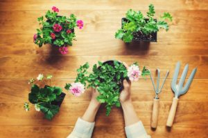 Best Christmas Gifts for Gardeners Who Have Everything