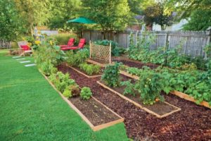7 Impressive Tips for growing more in Your Garden Area