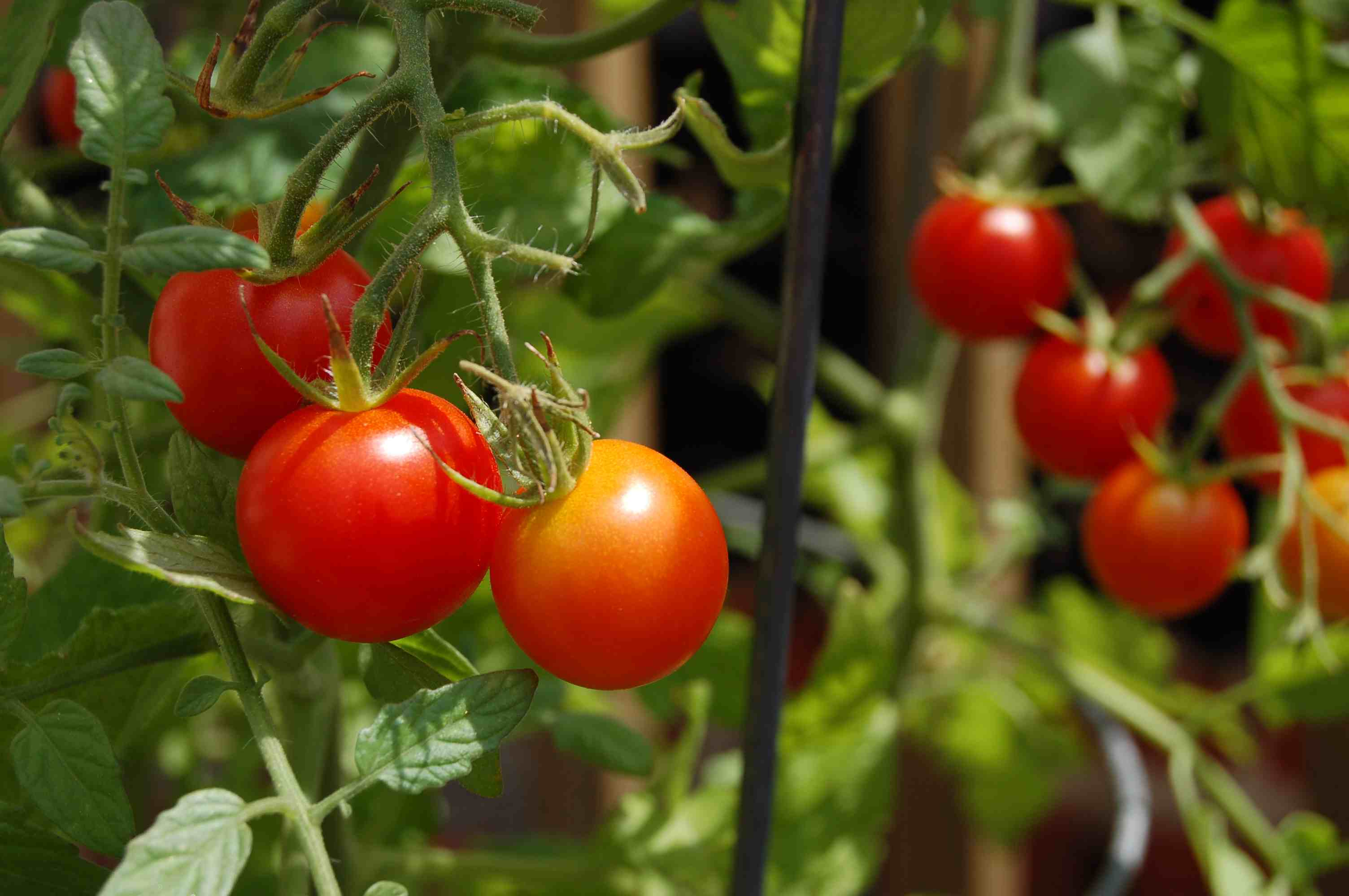 8 Impressive Ways to Growing more in Your Garden Space - Select Fruits and Vegetables.jpg
