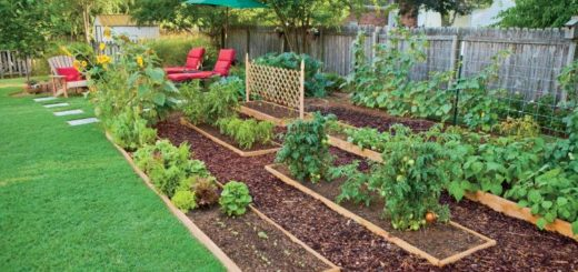 8 Impressive Ways to Growing more in Your Garden Space - Edible landescaping.jpg
