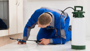 10 Tips for Protecting Your Attic From Pests