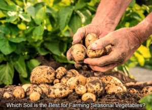 Which Soil is the Best for Farming Seasonal Vegetables?