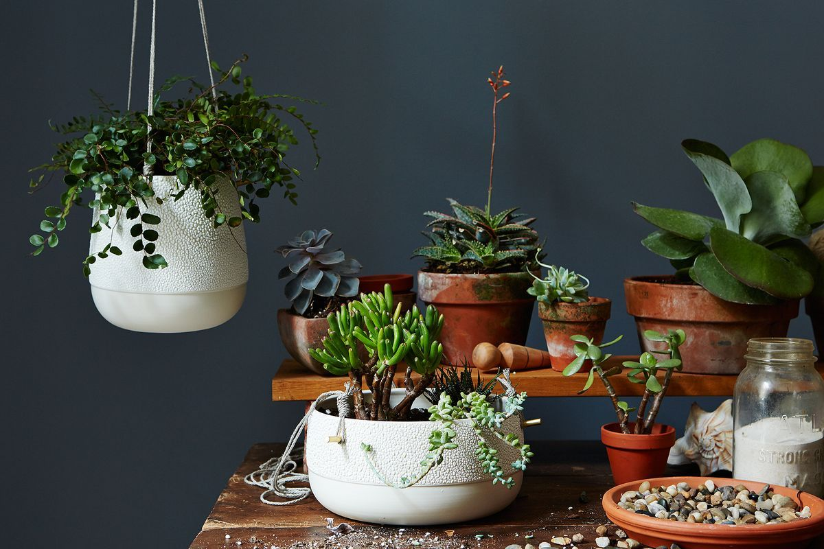 Potted Plants in winters