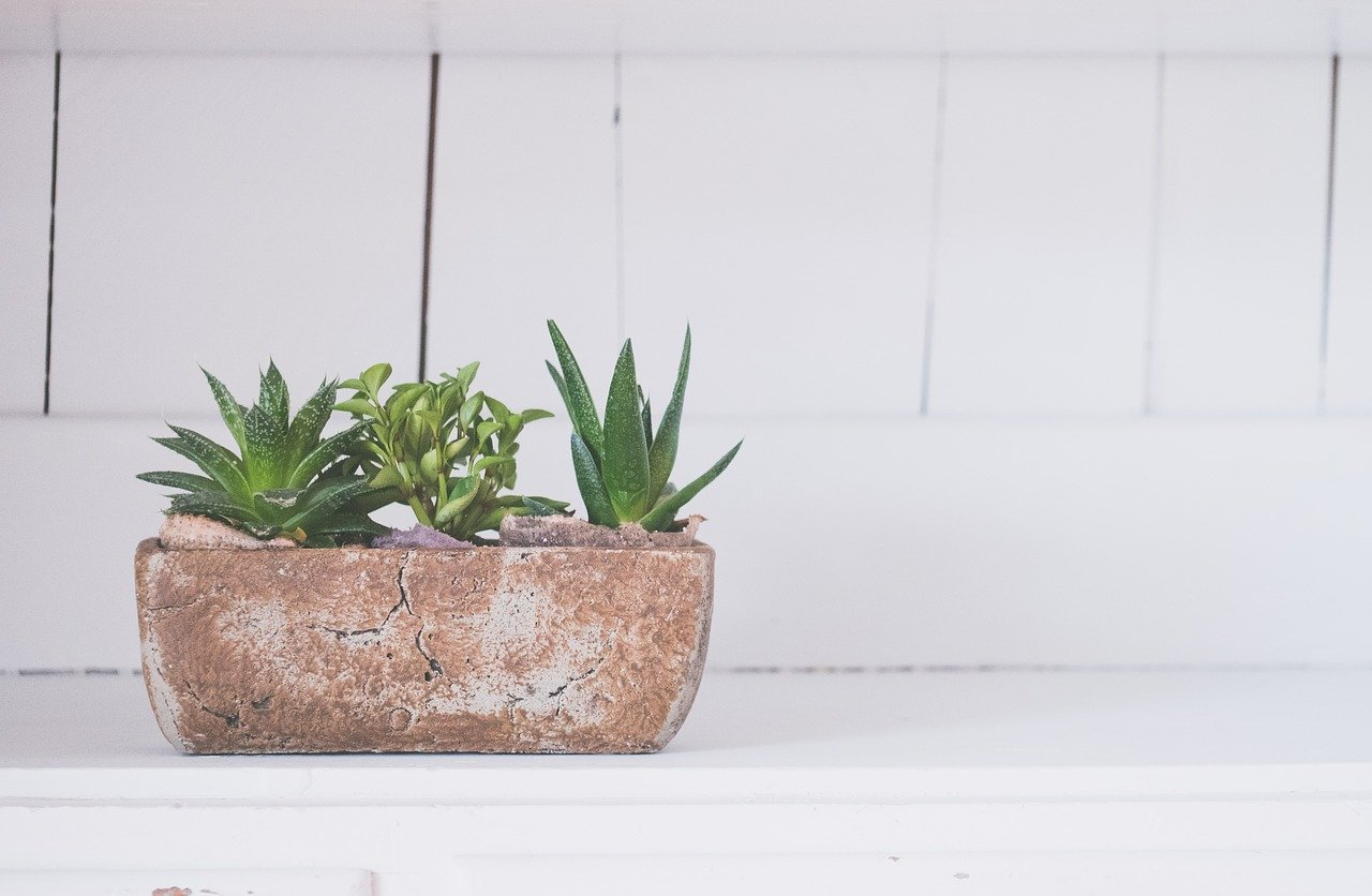 5 Bathroom Plants You Can Use in Your Bathroom