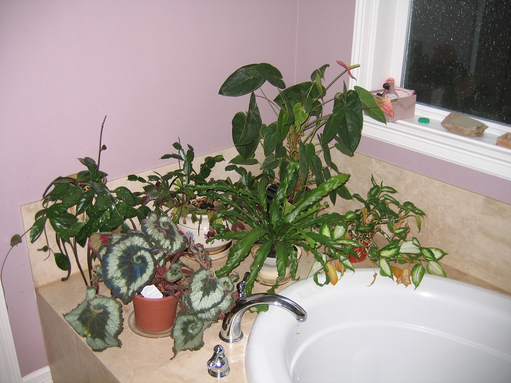 Image result for bathroom plants