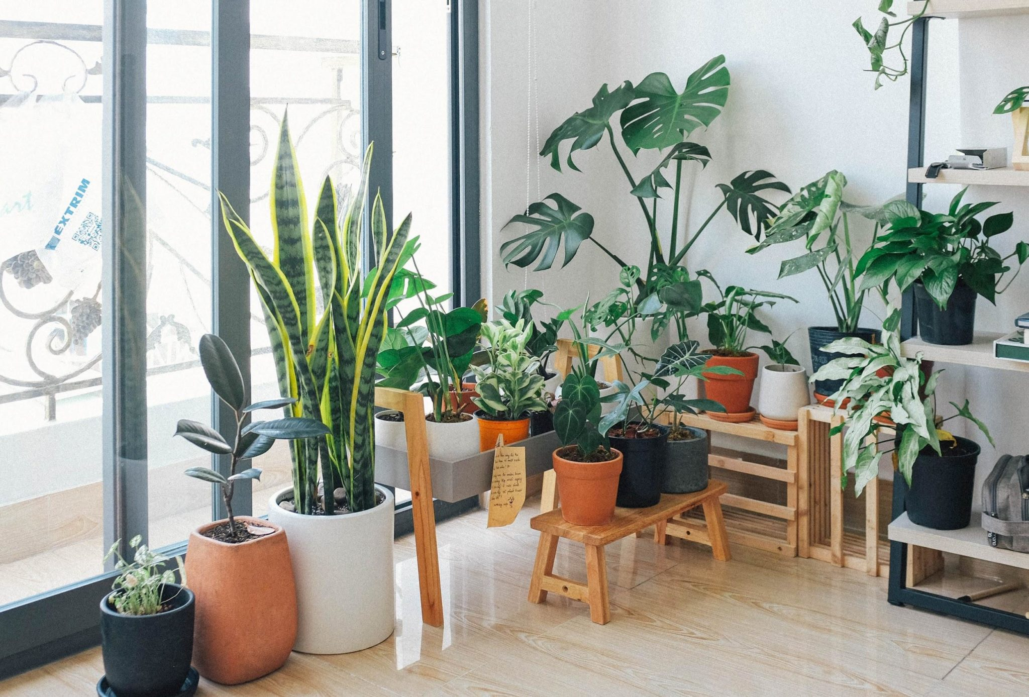 How to Find The Right Indoor Plant